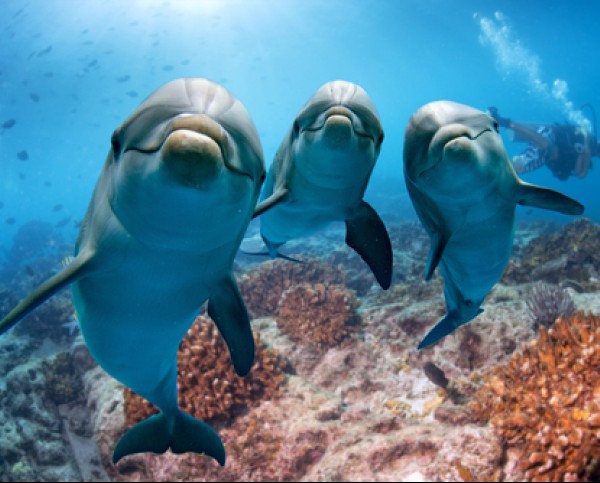 three dolphins underwater