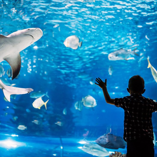 boy looking at an aquarium
