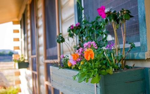 Flower bed attached to a cabin with pink and orange flowers blooming