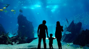 Family looking at an aquarium exhibit
