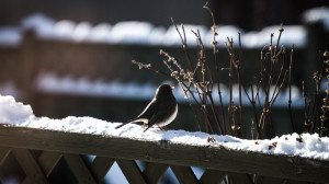 bird on ledge in snow