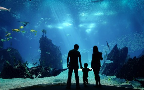 Family watching marine life swim by at an aquarium