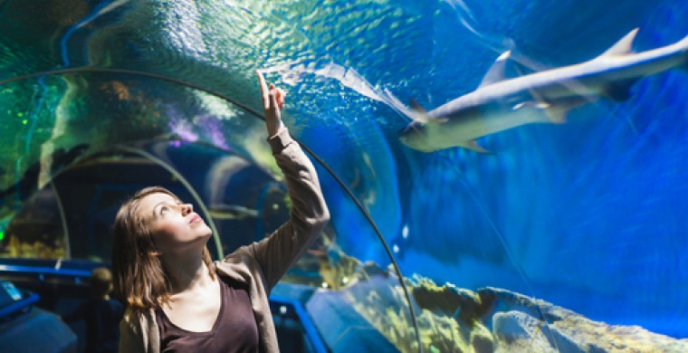 girl in aquarium tunnel with sharks
