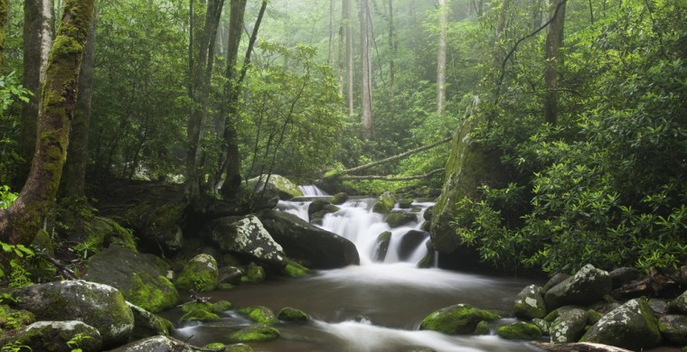 Scenic forest with cascading stream