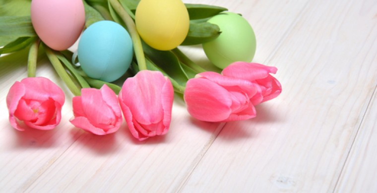 Colored eggs nestled on tulips