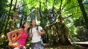 Young couple hiking in the forest